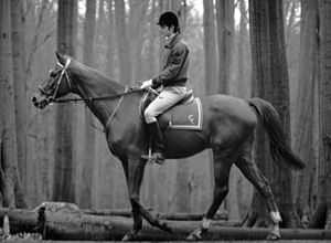 image d accessoire de chevaux