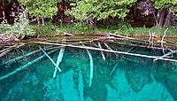 Kitch-iti-kipi underwater trees.jpg