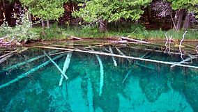 Kitch-iti-kipi underwater trees.jpg
