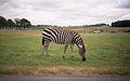 Knowsley Safari Park, Prescot - panoramio (1).jpg