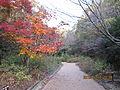 Kobe Municipal Arboretum in 2013-11-16 No,8.JPG