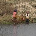 Koshi Tappu Wetlands, Nepal.jpg