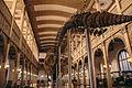 La Ballena Greta, exposición Museo Nacional de Historia Natural.jpg