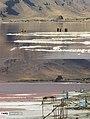 Lake Urmia 13960412 04.jpg