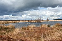 Lake on Whixall Moss - geograph.org.uk - 762733.jpg