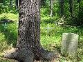 Lamington black cemetery graves.jpg