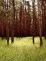 Landscape near Kunkovice 3.jpg