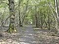 Langley Wood - geograph.org.uk - 417364.jpg