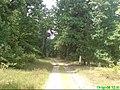 Leśna droga w okolicach Piły - panoramio.jpg