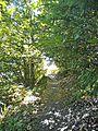 Le Cavallaie-paesaggio 27.jpg