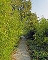 Le Jardin des Géants à Lille - Chemin des bambous - panoramio (1).jpg