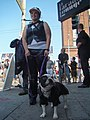 Leather pup (3966714920).jpg