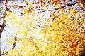 Leaves and sky (7051981547).jpg