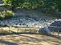 Les parcs à moutons.jpg