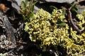 Lichen (20400091910).jpg