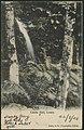 Linda Fall, Leura, 1908 (8285825089).jpg