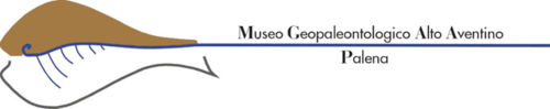 Logo Museo.png