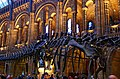 London - Cromwell Road - Natural History Museum IV.jpg
