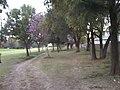Los Naranjos, 37673 León, Gto., Mexico - panoramio.jpg