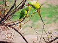 Loving Birds.jpg