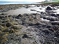 Low tide on the Moray Firth - geograph.org.uk - 955487.jpg