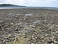 Low tide on the Taw-Torridge estuary - geograph.org.uk - 1323024.jpg