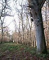 Lower Wood Nature Reserve - nest boxes on tree - geograph.org.uk - 1614944.jpg