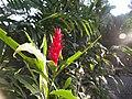 Luang Prabang Botanic Gardens (33528148966).jpg