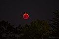 Luna rossa 03 (43647794552).jpg