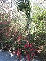 Magnolia Plantation and Gardens - Charleston, South Carolina (8556509784).jpg