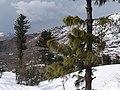 Malam Jabba Top Swat valley.jpg