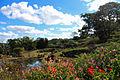 Maleny Botanic Gardens.jpg