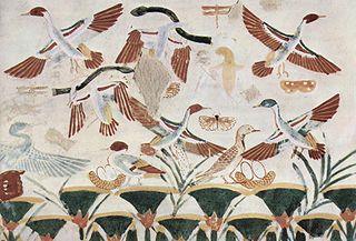 Timeline of ornithology