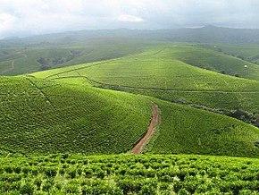 Mambila Plateau of Taraba State.jpg