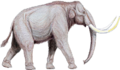 Mammuthus trogontherii122DB.png
