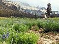 Mariposa County, CA, USA - panoramio (26).jpg