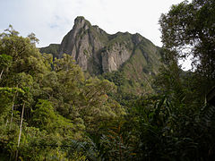 Marojejy National Park, Madagascar (4026829251).jpg