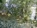 Mehedinți, zona golfului Bahna (30).JPG