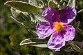 Menorca 2014-164 (16233178038).jpg