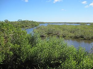 Merritt Island National Wildlife Refuge - Image: Merritt Island National Wildlife Refuge
