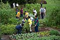 Michelle Obama joins school children and chefs for the annual fall harvest of the White House Kitchen Garden, Oct. 14, 2014.jpg