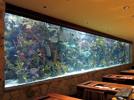 A 20,000-gallon (76,000 L) tropical reef aquarium stands along the wall behind the reception counters at The Mirage in Las Vegas, Nevada. Mirage Aquarium (8226785671).jpg