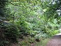 Mixed forest - geograph.org.uk - 494141.jpg