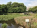 Moat near site of Oimawashi-Gomon Gate of Fukuoka Castle 5.jpg