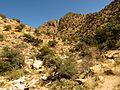 Molino Basin - Flickr - treegrow.jpg