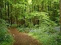 Monk's Wood, Stevenage - geograph.org.uk - 165792.jpg