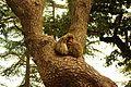 Monkeys love.jpg