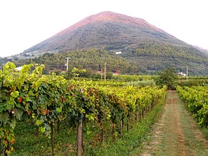 Monte Acero - Monte Acero seen from a road in Cerreto Sannita - San Salvatore Telesino early morning.