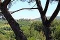 Monteriggioni, castello di castiglionalto o di castiglion ghinibaldi, veduta verso montriggioni, 02.jpg