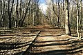 Moscow, road through Losiny Ostrov forest (19184080225).jpg